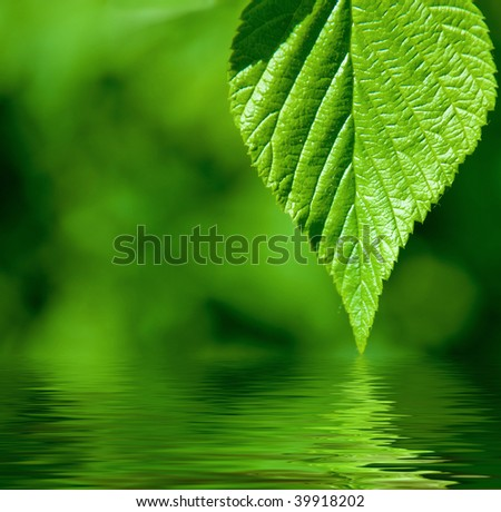 green leaves over water - stock photo