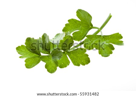 Green leaves parsley - stock photo