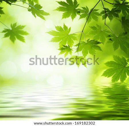 Green leaves reflecting in the water,Shallow Dof. - stock photo