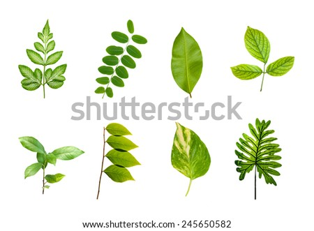 green leaves set isolated over white background. - stock photo