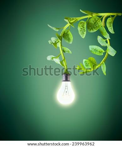 green leaves supply energy to lightbulb, green energy concept - stock photo
