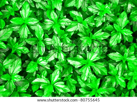 Green Leaves Texture - stock photo