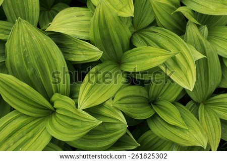 Green leaves texture background macro - stock photo