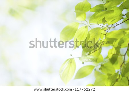 Green leaves under sunlight - stock photo