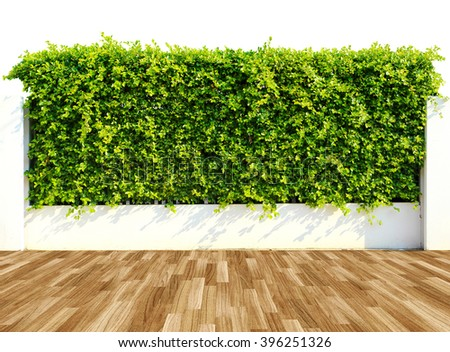 Green leaves wall and wood floor - stock photo