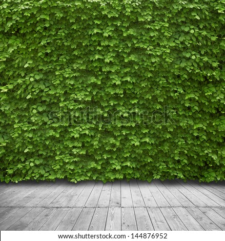 Green leaves wall and wood floor for background - stock photo