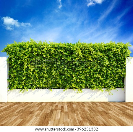Green leaves wall and wood floor with blue sky - stock photo