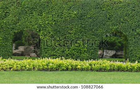 Green leaves wall background in the garden - stock photo