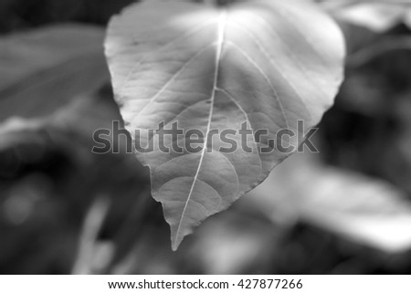 Green leaves wall background   White  black - stock photo