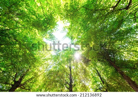 Green leaves with a bright sun shining through  - stock photo