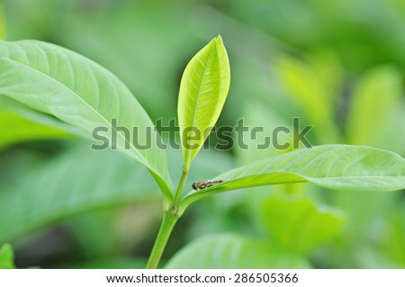 Green leaves with blurred background by macro lens
