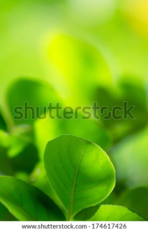 Green leaves with copyspace of beautiful bokeh background. - stock photo