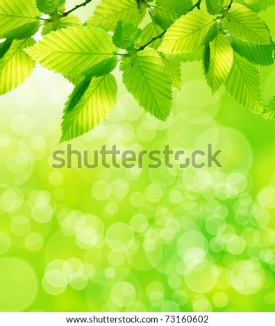 Green leaves with natural background