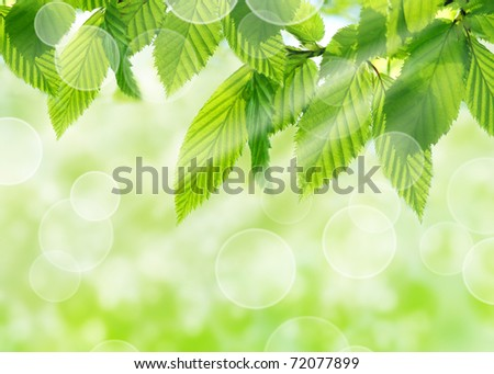 Green leaves with natural bokeh