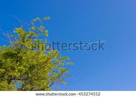green leaves with plane trail on blue sky background - stock photo