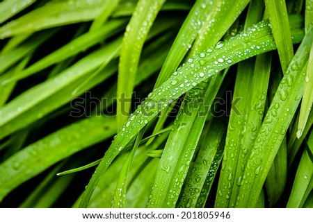 Green leaves with raindrops. - stock photo