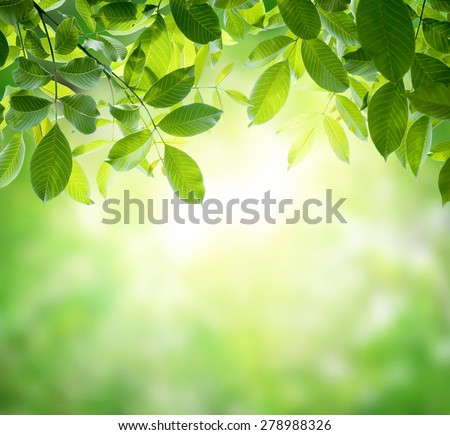 green leaves with sun - stock photo