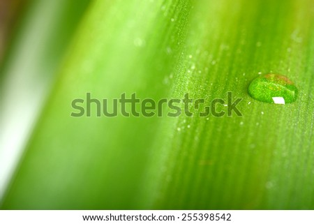 green leaves with water droplets close-up - stock photo