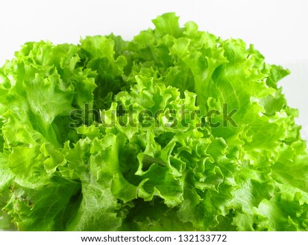 Green Lettuce closeup
