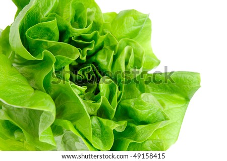 Green lettuce isolated on the white background. - stock photo