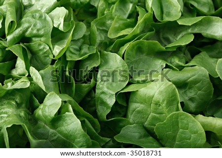 Green lettuce leaves,  full frame