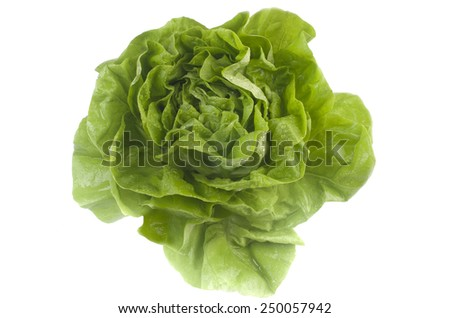 Green lettuce on white background. - stock photo