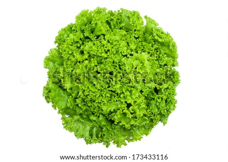 green lettuce on white isolated  - stock photo