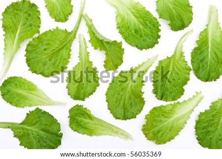 Green lettuce salad leafs - stock photo
