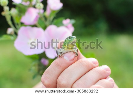 Green lizard in hands of the person. Small reptile. Sharping only on eyes. - stock photo