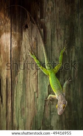 Green lizard on a tree - stock photo
