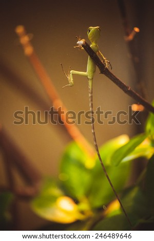 green lizard with very long tail on branch  - stock photo