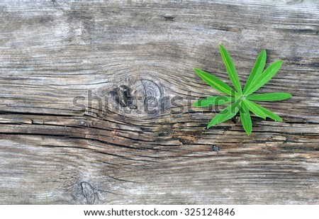 Green Lupine Plant Leaves on the Old Board - stock photo