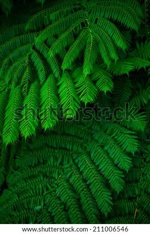 Green lush ferns growing in wild rain forest of Queensland Australia - stock photo