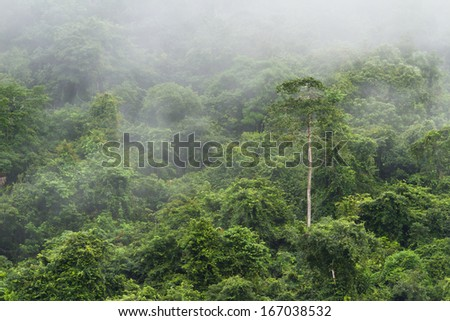 green lush jungle in the Cayo district of Belize with a light rain - stock photo