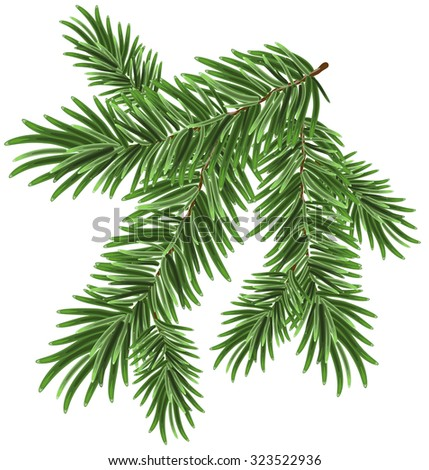 Green lush spruce branch. Fir branches. Isolated illustration - stock photo