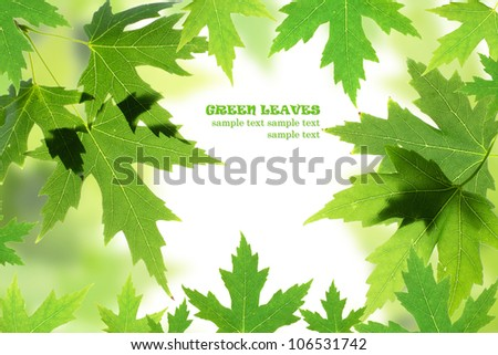 Green maple leaves border isolated on white. Natural frame - stock photo
