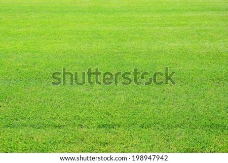 green meadow - stock photo