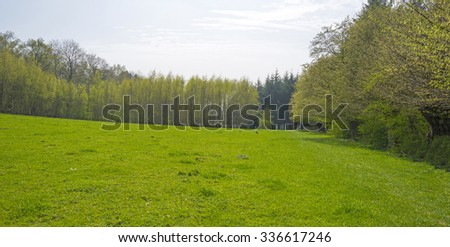 Green meadow along a forest in spring