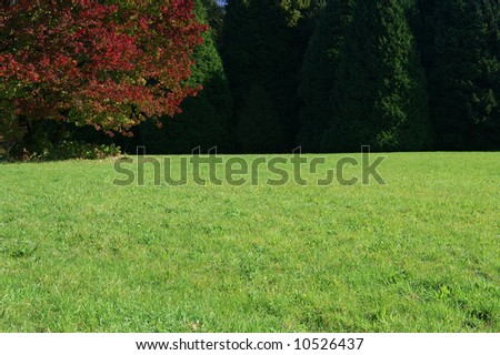Green meadow and tree with red leaves. Very soft focus.