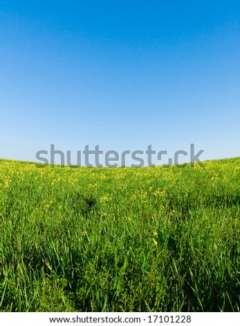 green meadow, blue sky with concave horizon
