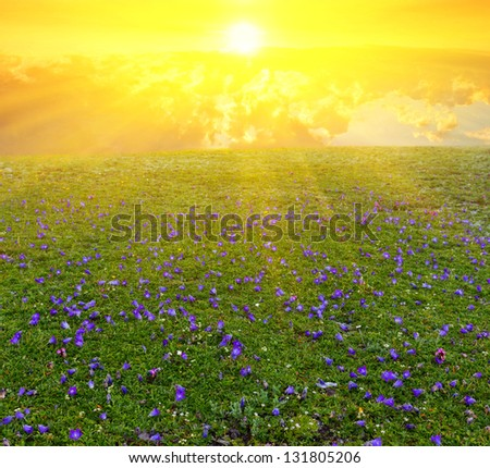 green meadow in a rays of sun - stock photo