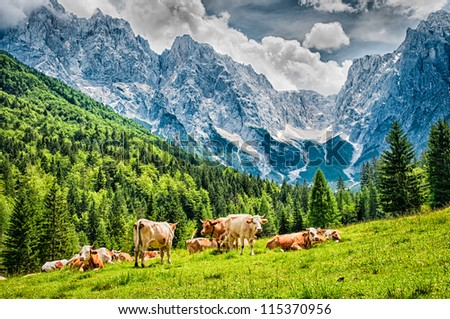 Green meadow in mountains and cows - stock photo