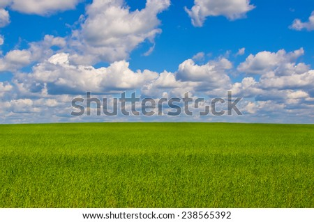 Green meadow in sunny day. Summer landscape - stock photo