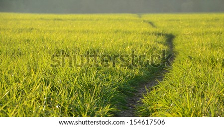 Green meadow in the sunshine in the evening - stock photo