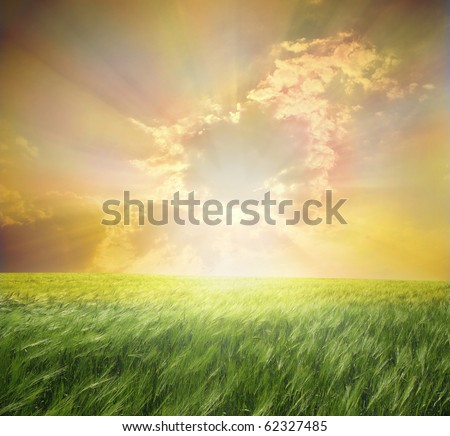 Green meadow under  beautiful sky with clouds