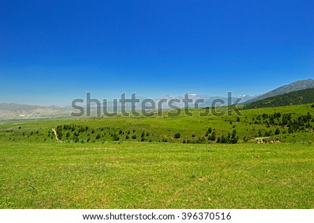 Green meadow with mountains in background, Kyzylbulak, Kyrgyzstan