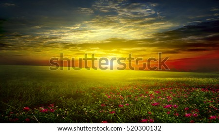 green meadow with sky and clouds and pink flowers