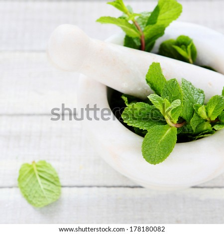 green mint in a mortar, herbs - stock photo