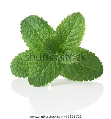 Green mint. Isolated over white - stock photo