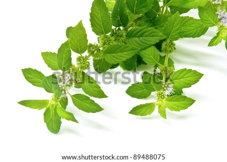 Green mint leaves and flowers isolated on white background - stock photo